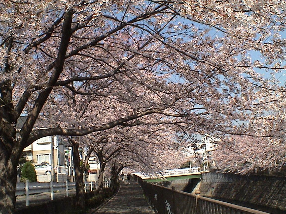 Displaying Images For - Bokep Jepang...